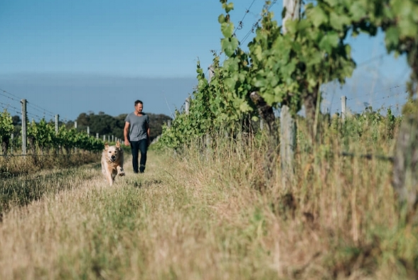 Dog-Friendly Wineries