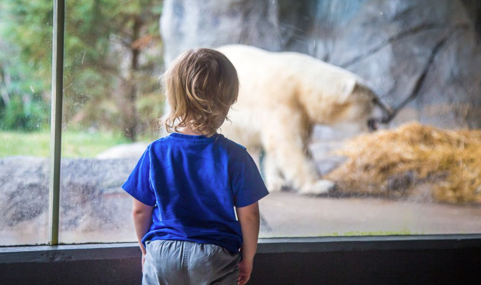 Zoo Trip for kids
